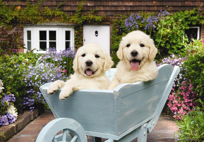 Puzzle Anatolian Cachorros en el Carro de 260 Piezas