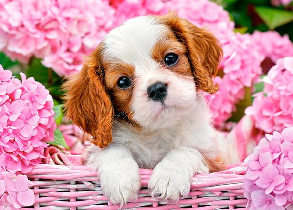 Puzzle Castorland Cachorro en Flores Rosas de 180 Piezas