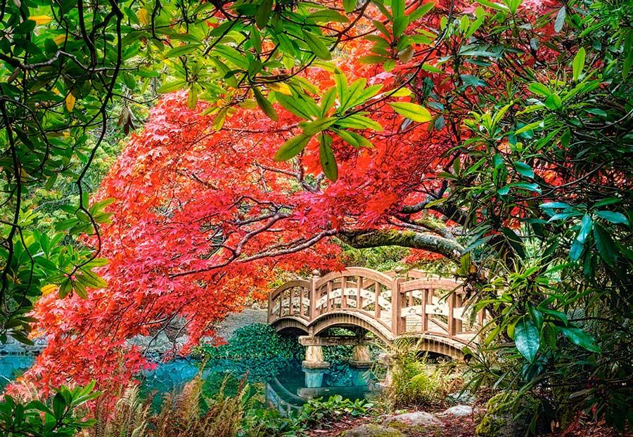 Puzzle Castorland Jardín Japonés de 1000 Piezas