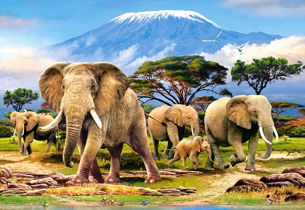 Puzzle Castorland Mañana en el Kilimanjaro de 1000 Piezas