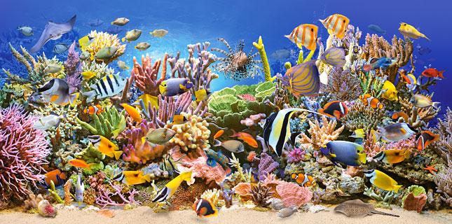 Puzzle Castorland Vida Submarina en el Arrecife de 4000 Piezas
