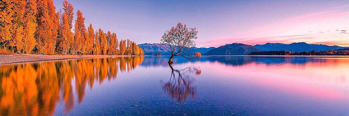 Puzzle Clementoni Árbol en Lago Wanaka Panorama de 1000 Pzs