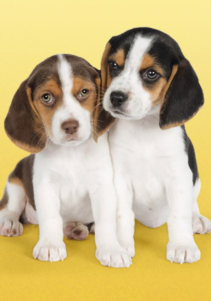 Puzzle Clementoni Bonitos Cachorros de 500 Piezas