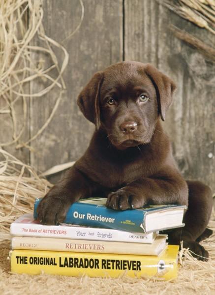 Puzzle Clementoni Cachorro Sobre el Libro de 1000 Piezas
