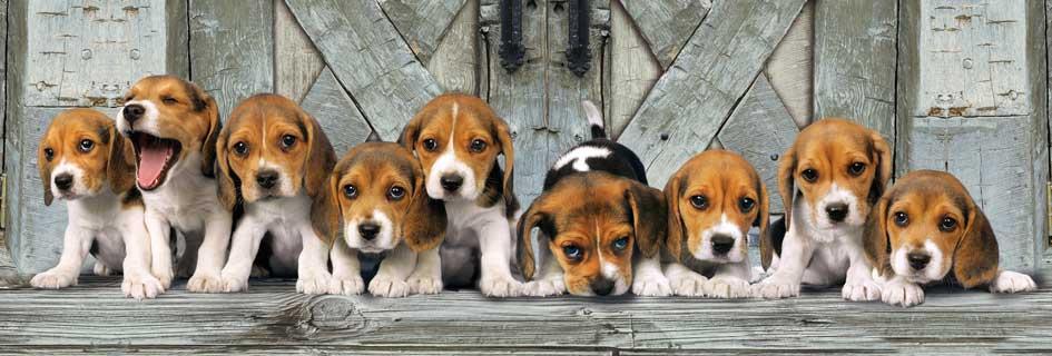 Puzzle Clementoni Cachorros de 1000 Piezas