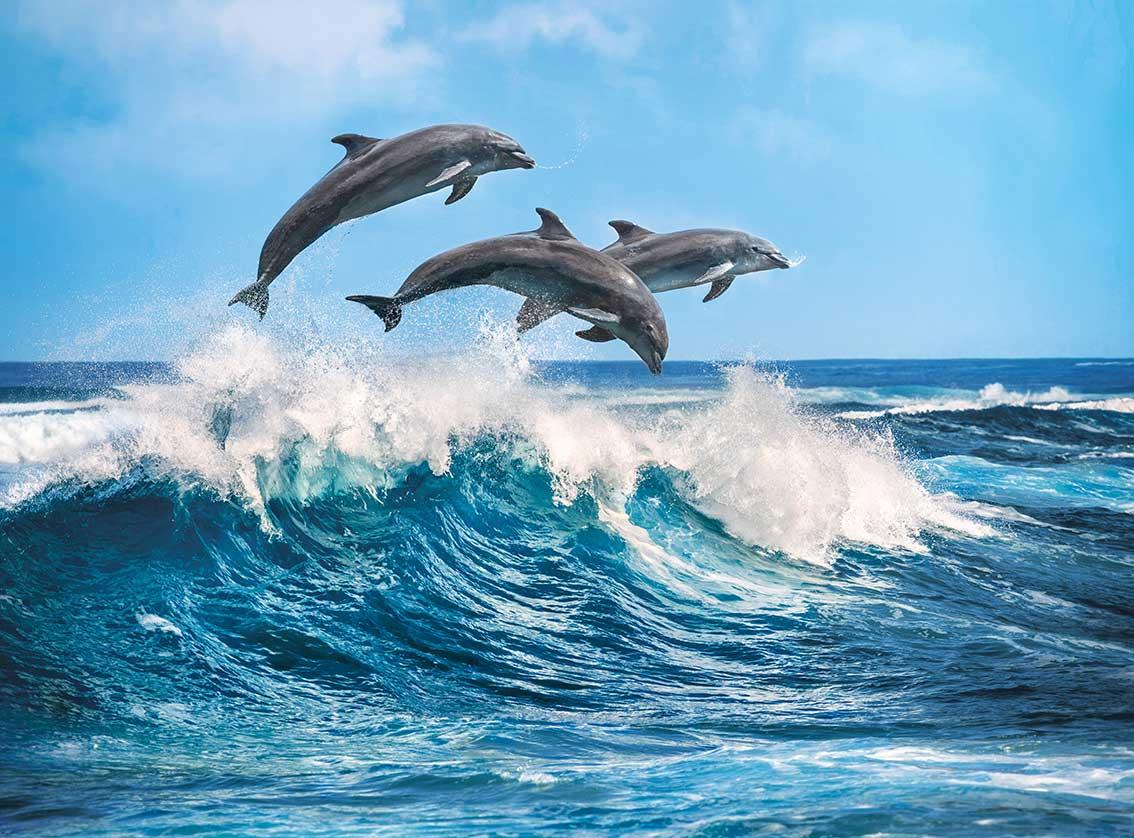 Puzzle Clementoni Delfines de 500 Piezas