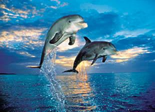 Puzzle Clementoni Dolphins de 500 Piezas