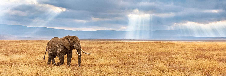 Puzzle Clementoni Elefante Perdido en la Sabana de 1000 Piezas