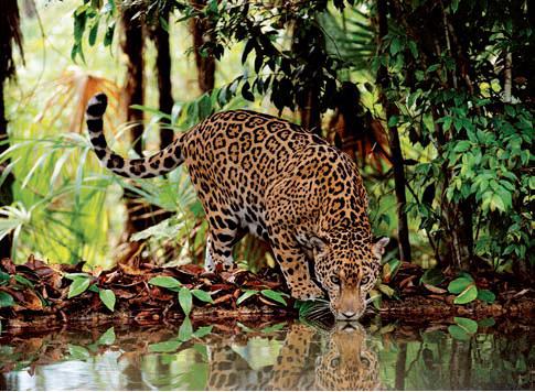 Puzzle Clementoni Leopardo de 2000 Piezas