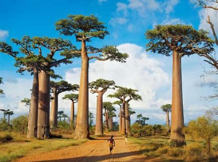 Puzzle Clementoni Madagascar de 1000 Piezas