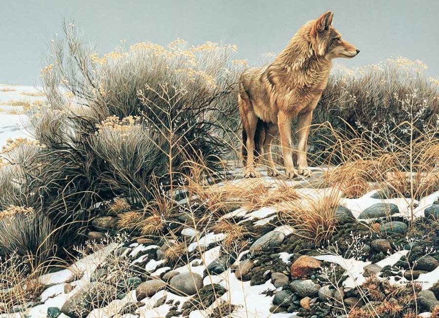 Puzzle Cobble Hill Coyote en el Frio Invierno de 1000 Piezas