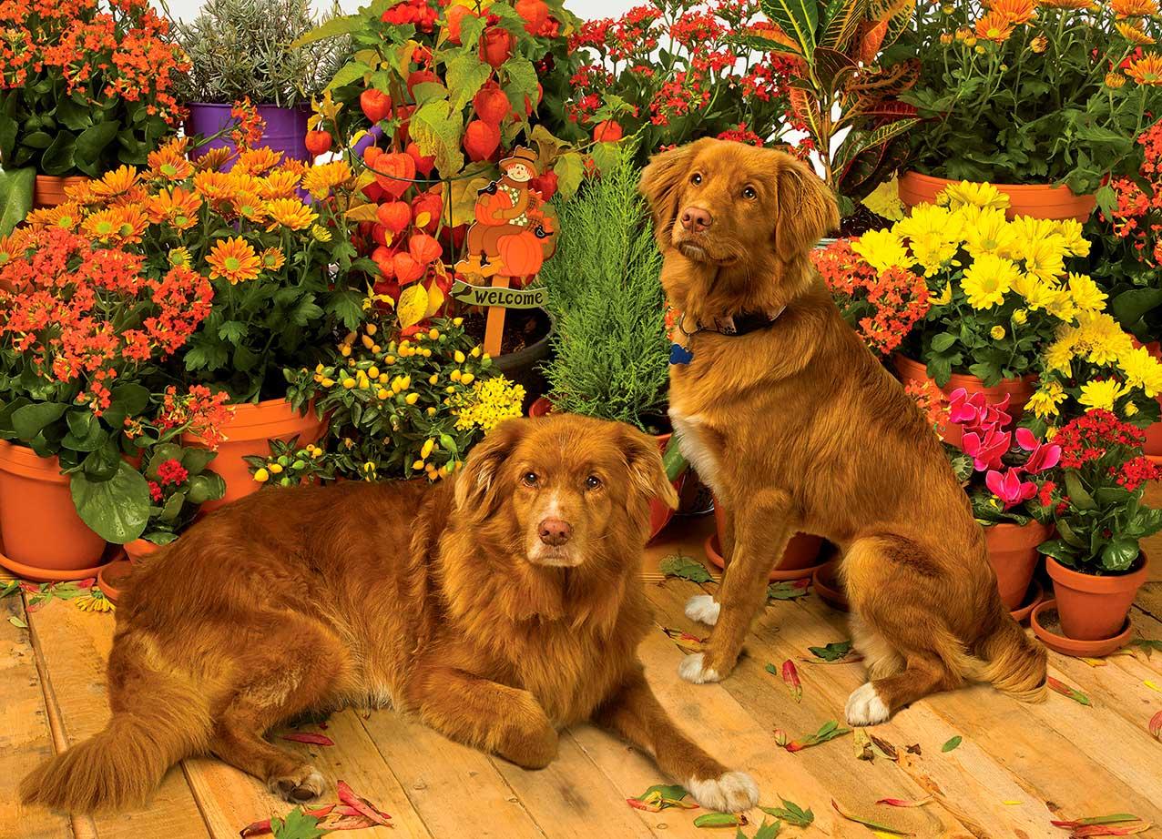 Puzzle Cobble Hill Guardianes de las Flores 1000 Piezas