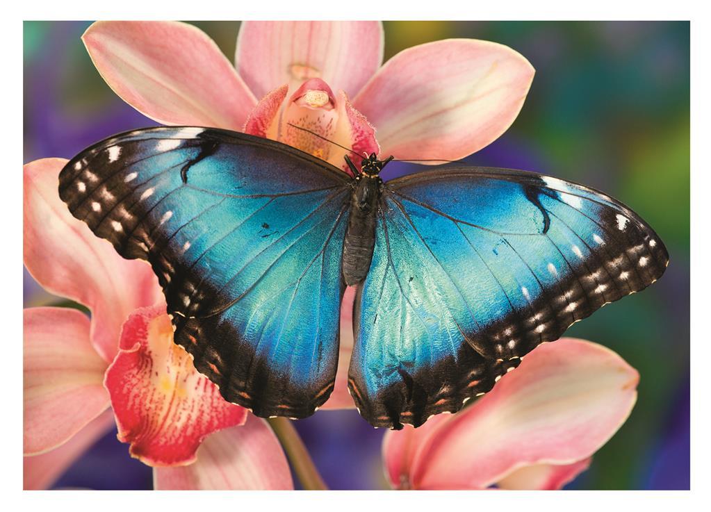 Puzzle Dino Mariposa de 500 Piezas