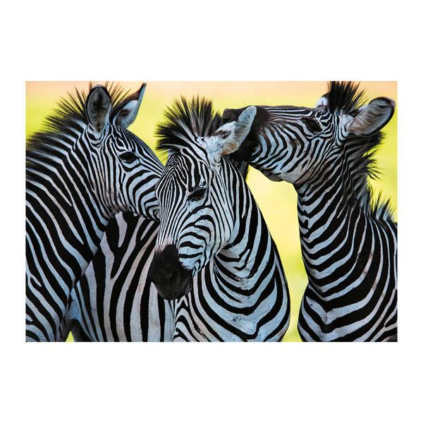Puzzle Dino Tres Cebras de 500 Piezas