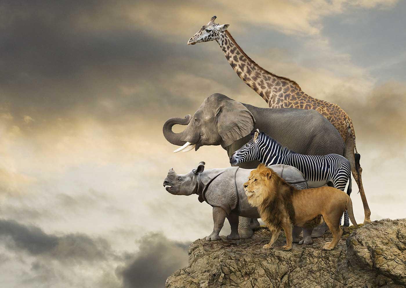 Puzzle Educa Animales al Borde del Abismo de 500 Piezas