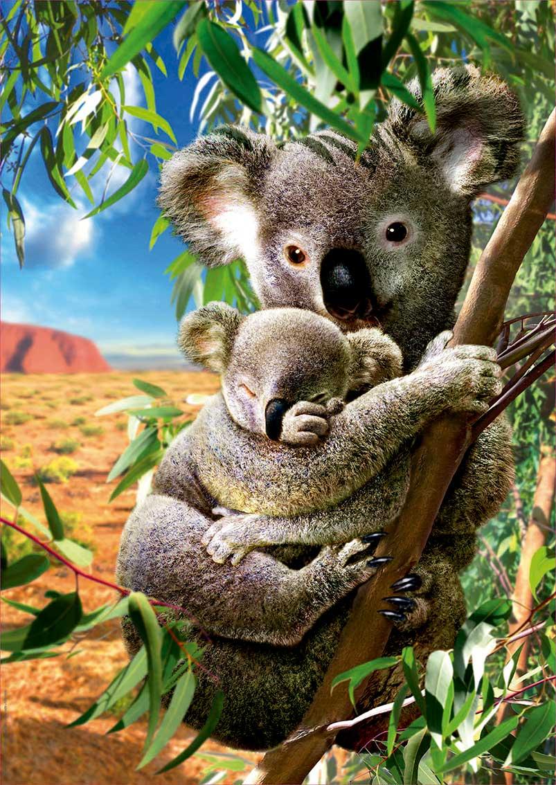 Puzzle Educa Koala con su Cachorro de 500 Piezas