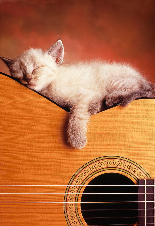 Puzzle Educa Mi Guitarra de 500 Piezas