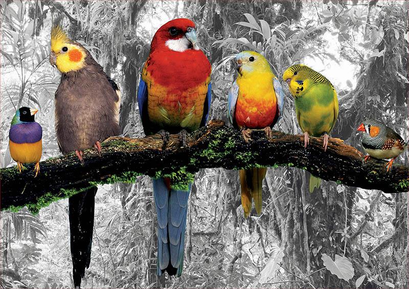 Puzzle Educa Pájaros en la Jungla de 500 Piezas