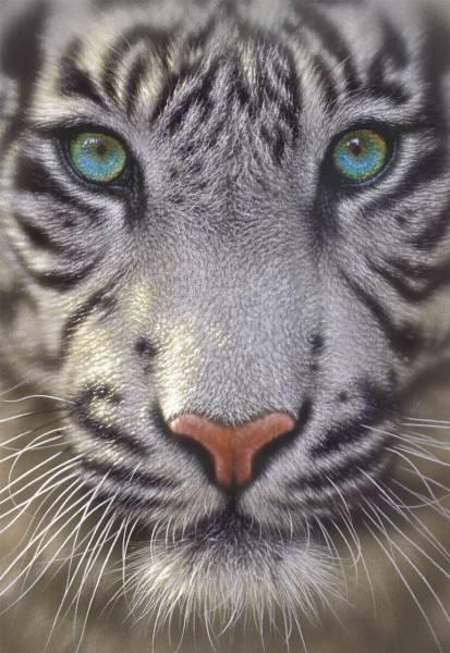 Puzzle Educa Tigre Blanco de 500 Piezas