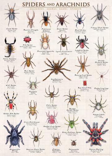 Puzzle Eurographics Arañas y Arácnidos de 1000 Piezas