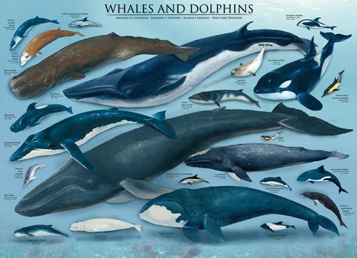 Puzzle Eurographics Ballenas y Delfines de 1000 Piezas