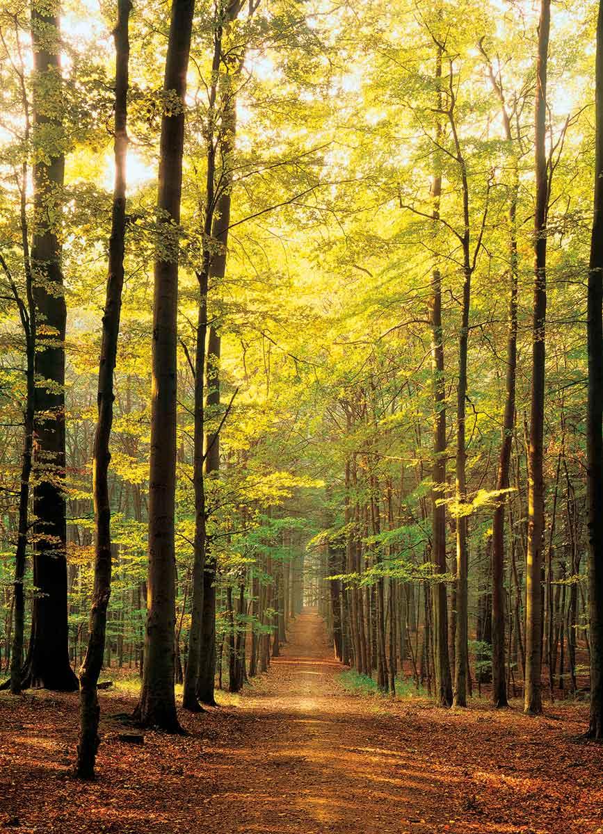 Puzzle Eurographics Camino en el Bosque de 1000 Piezas