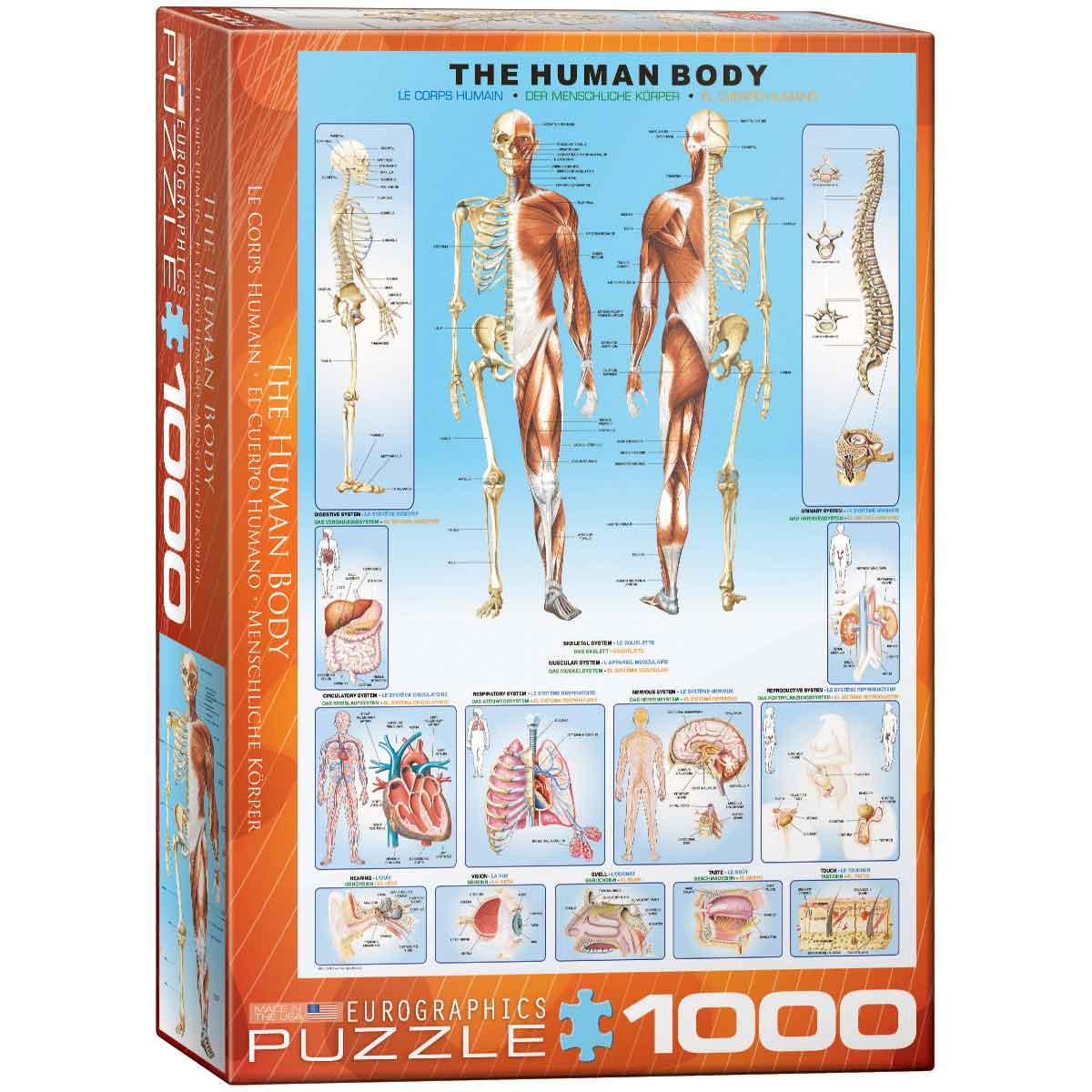 Puzzle Eurographics El Cuerpo Humano de 1000 Piezas