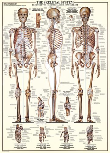 Puzzle Eurographics El Esqueleto de 1000 Piezas