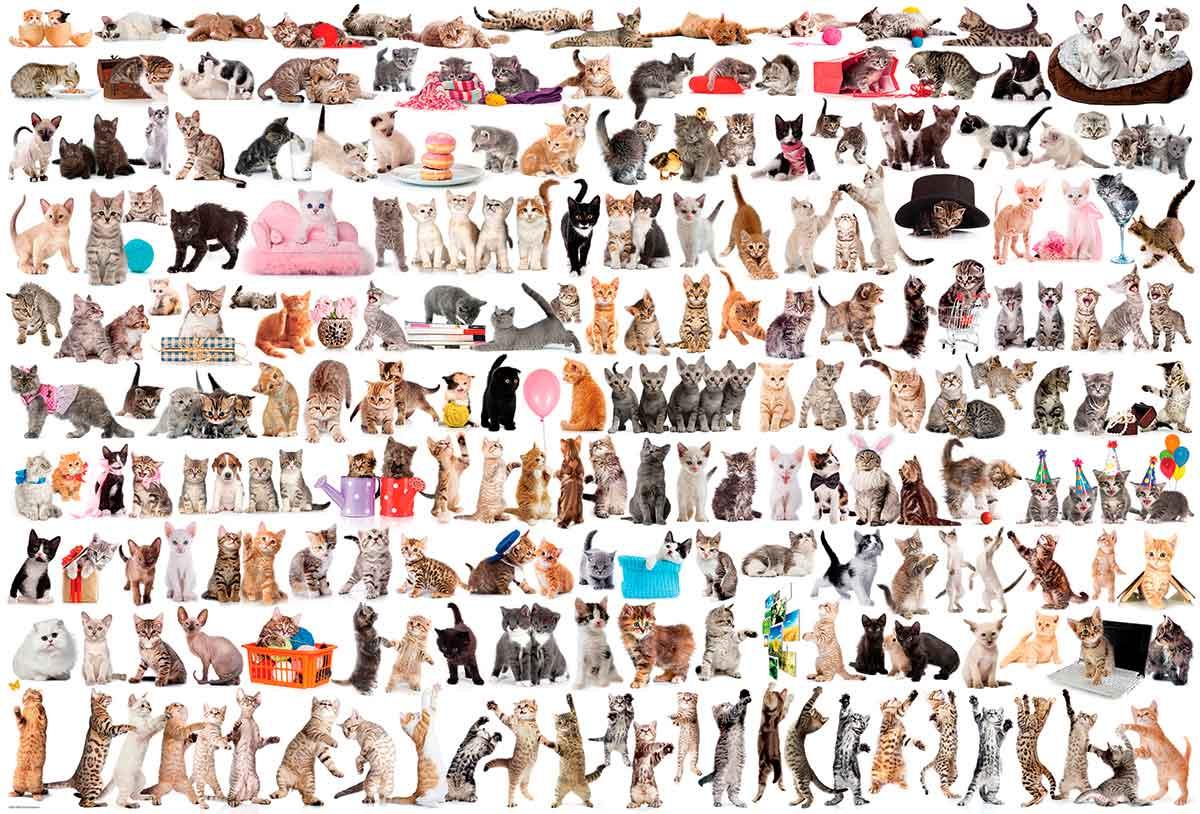 Puzzle Eurographics El Mundo de los Gatos de 2000 Piezas