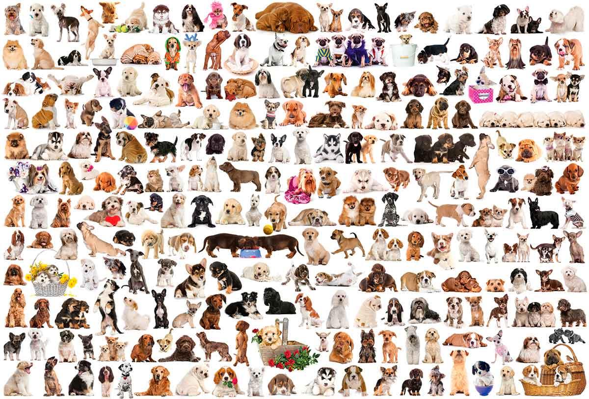 Puzzle Eurographics El Mundo de los Perros de 2000 Piezas