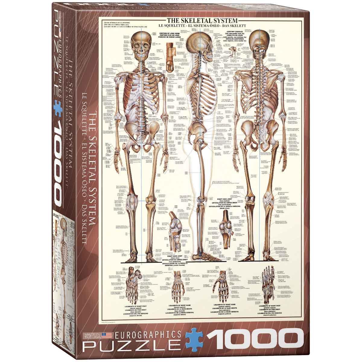 Puzzle Eurographics El Sistema Óseo de 1000 Piezas
