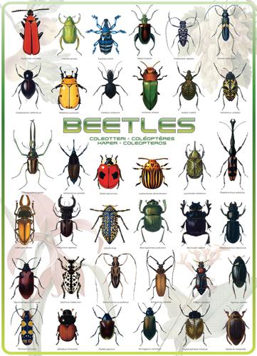Puzzle Eurographics Escarabajos de 1000 Piezas