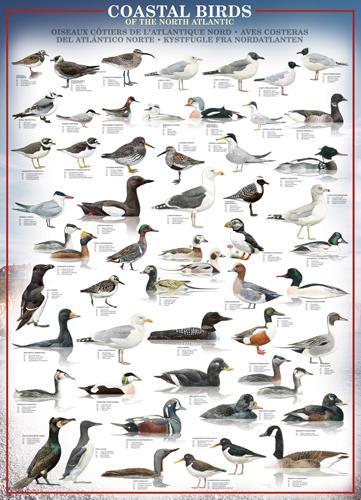 Puzzle Eurographics Pájaros Costeros del Norte del Atlántico de