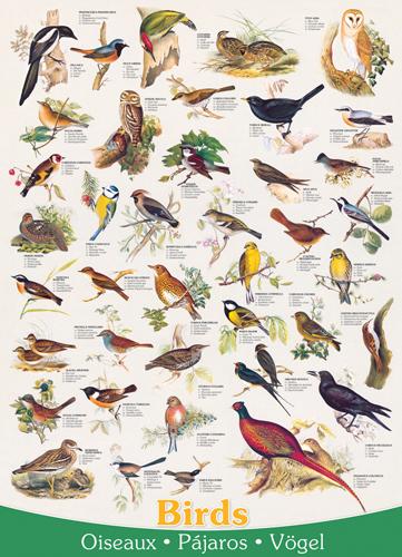 Puzzle Eurographics Pájaros de 1000 Piezas