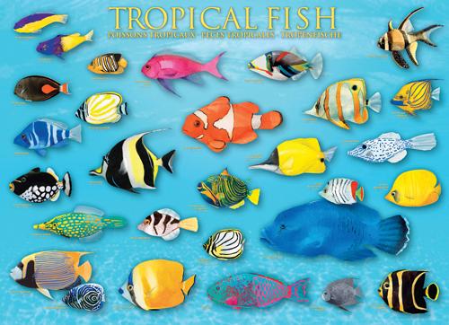 Puzzle Eurographics Peces Tropicales de 1000 Piezas