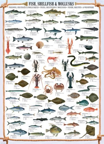 Puzzle Eurographics Pescados, Mariscos y Moluscos de 1000 Piezas