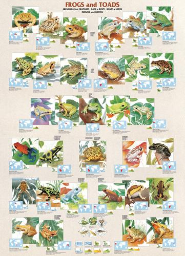 Puzzle Eurographics Sapos y Ranas de 1000 Piezas