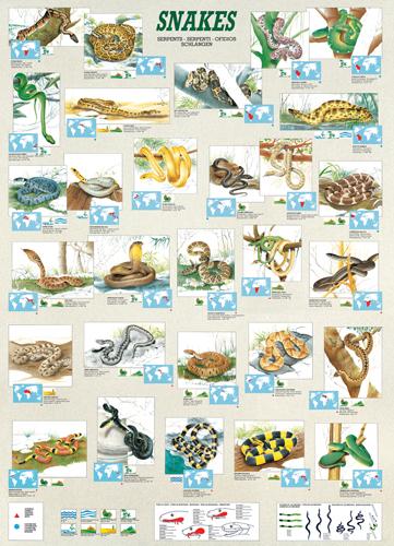 Puzzle Eurographics Serpientes de 1000 Piezas