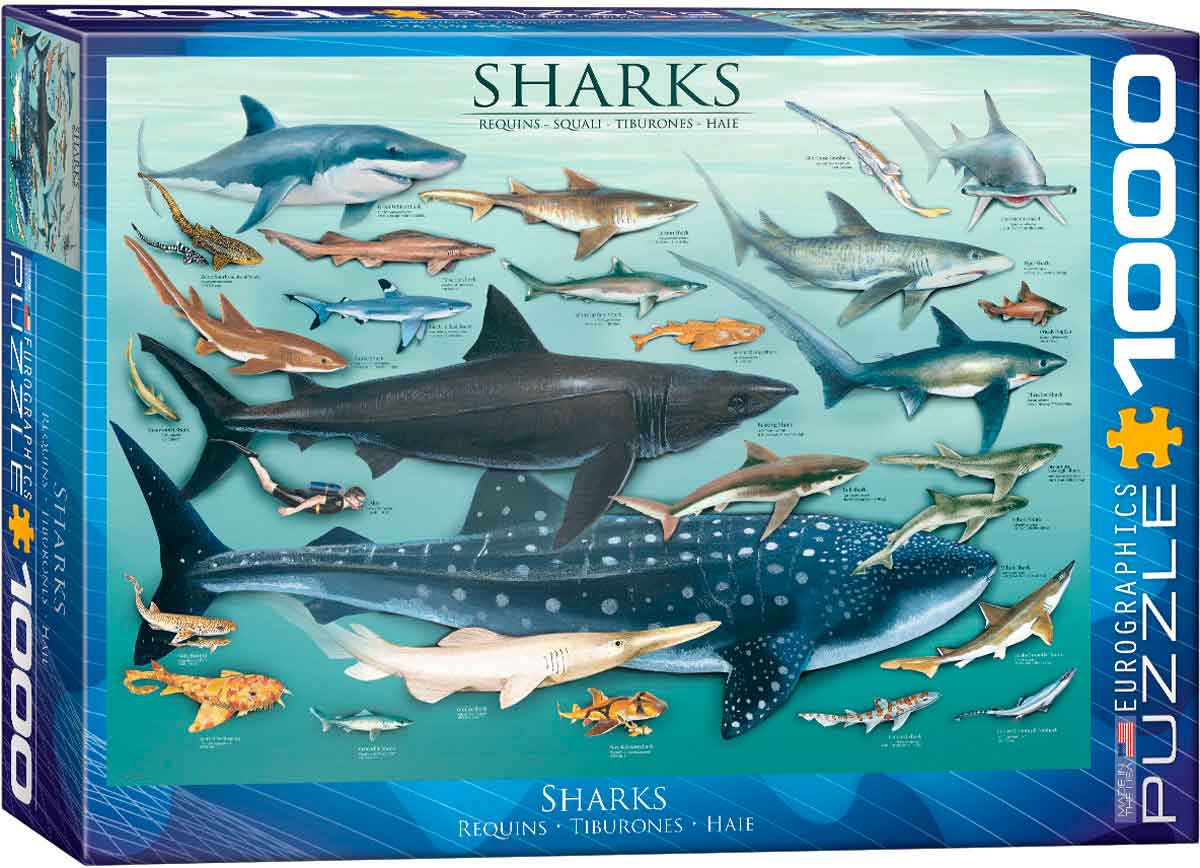 Puzzle Eurographics Tiburones de 1000 Piezas