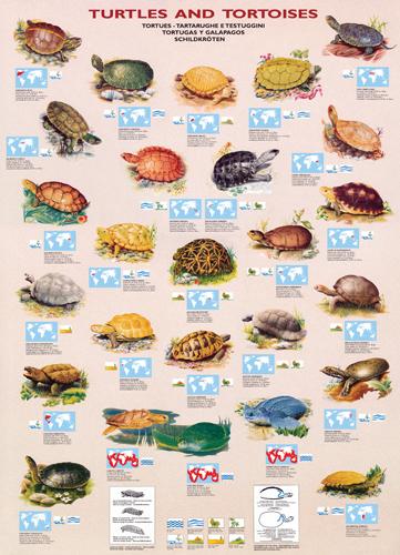 Puzzle Eurographics Tortugas y Galápagos de 1000 Piezas