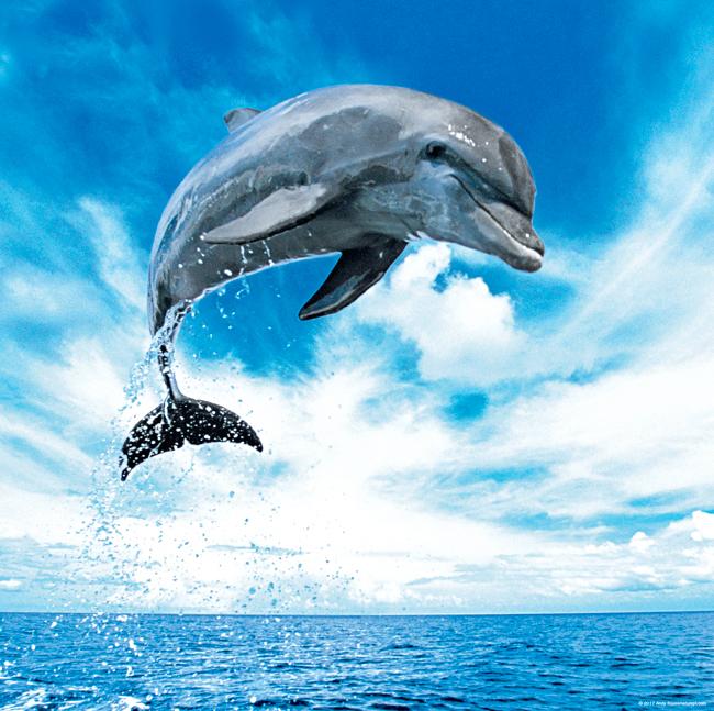Puzzle Heye Delfín de 1000 Piezas
