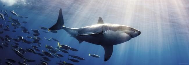 Puzzle Heye El Gran Tiburón Blanco de 1000 Piezas