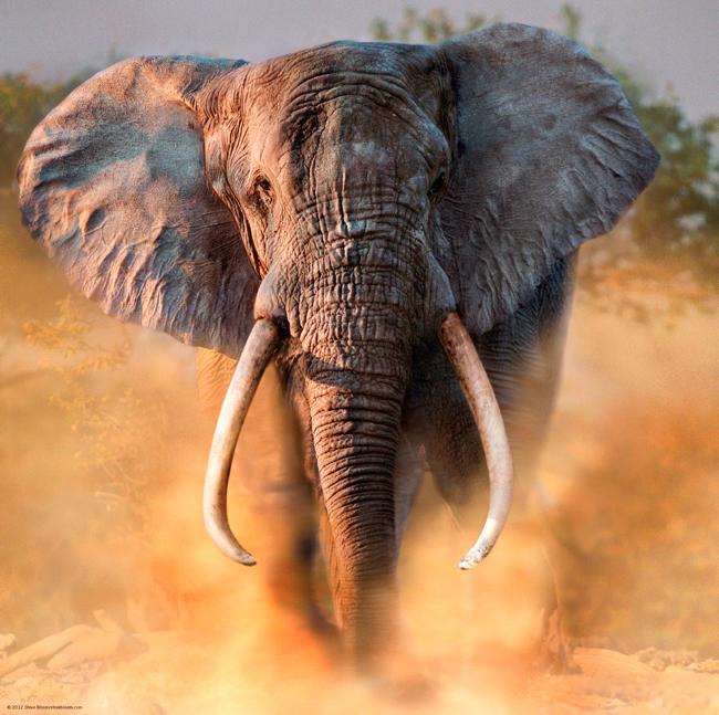 Puzzle Heye Elefante de 1000 Piezas