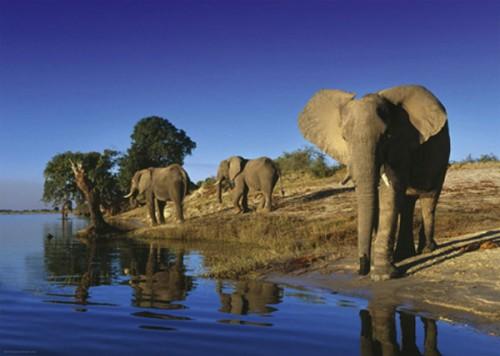 Puzzle Heye Elefante Sediento de 1000 Piezas