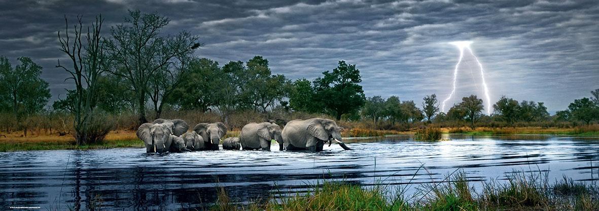 Puzzle Heye Manada de Elefantes de 2000 Piezas