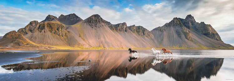 Puzzle Heye Panorámica Caballos de Islandia de 1000 Piezas