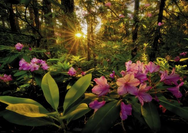 Puzzle Heye Rayos del Sol en el Bosque de 2000 Piezas
