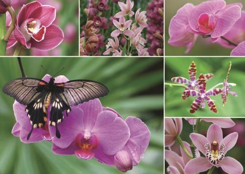 Puzzle Jumbo  Orquídeas de 1000 Piezas