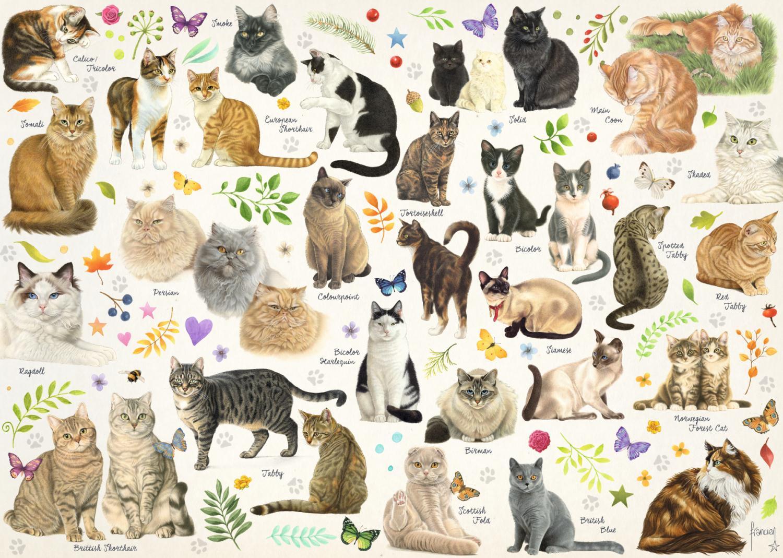 Puzzle Jumbo Poster de gatos de 1000 Piezas