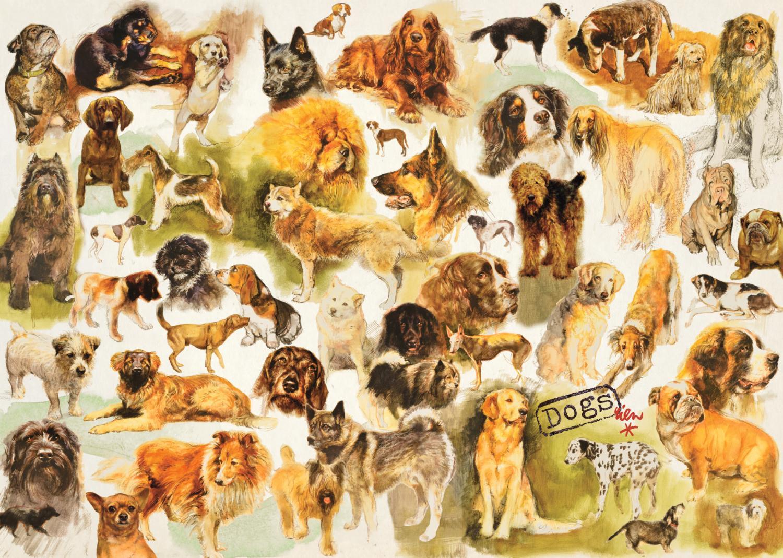 Puzzle Jumbo Poster de perros de 1000 Piezas